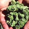 Young people choosing marijuana over cigarettes, alcohol