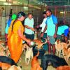 1,084 stray dogs get a delicious farewell in Vijayawada