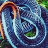 Deadly snake's venom can be used to make painkillers