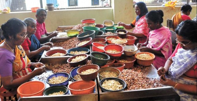 Kerala govt likely to set up a Cashew Board to save sector