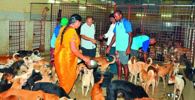 1,084 stray dogs get a delicious farewell in Vijayawada