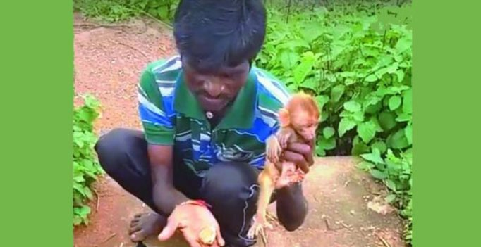 Rhesus monkeys infant being sold in plastic packets in Warangal