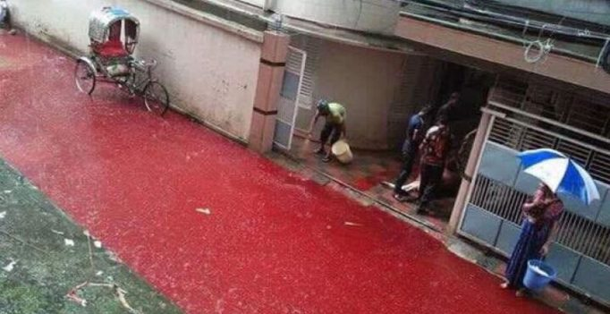 Waterlogging leads to 'bloody' streets in Dhaka on Eid