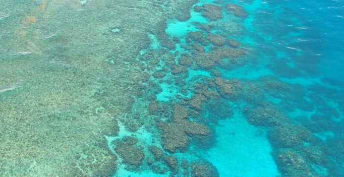 Damage to Great Barrier Reef costs ship owner $30 million