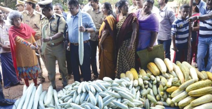 Brisk sales of pesticide-free veggies on prison premises in Thiruvananthapuram