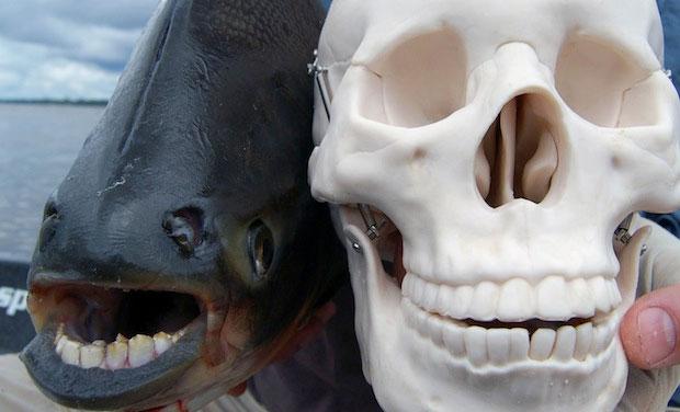 strange-fish