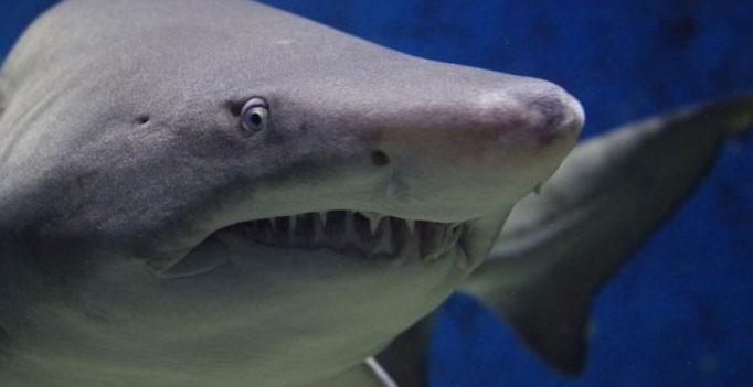 Scuba diver mauled by shark, takes boat to Australian island