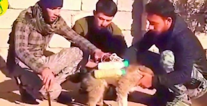 ISIS fits puppy bomber with bomb belt