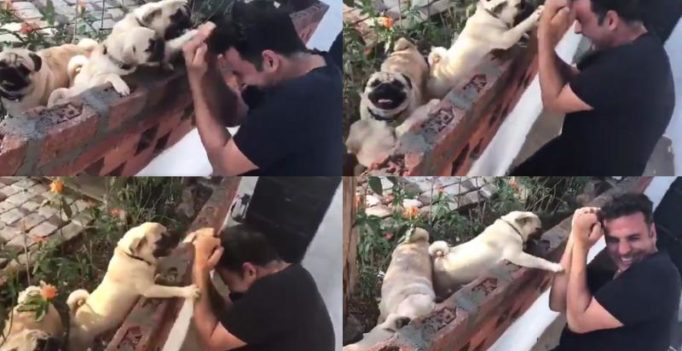 Watch: Akshay wrestling a pack of pups is the most adorable thing you'll see today