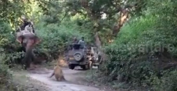 Video: Never do this when you spot a tiger in the wild