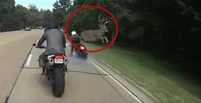 Video: Deer shocks biker by jumping over him to cross road