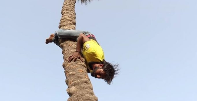 Video: Haryana construction worker climbs 70 ft tree upside down