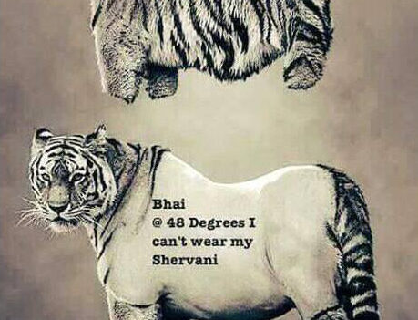Whatsapp Funny Tiger Photo