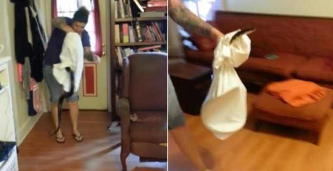 Video: Brave woman catches snake using pillow case