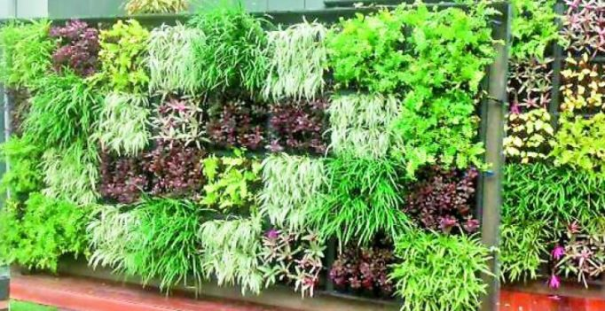 GHMC takes vertical route to green up its office spaces