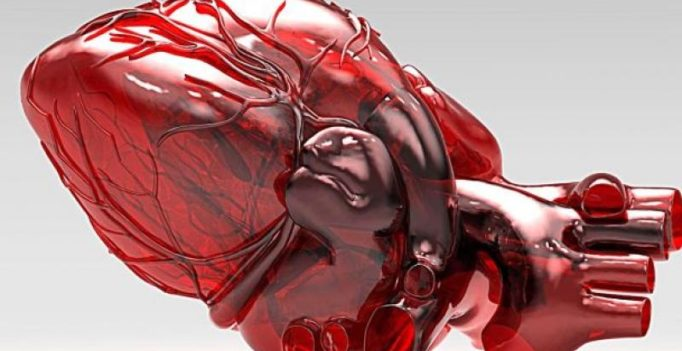 Miniature human heart made from rat's organ may help test new drugs