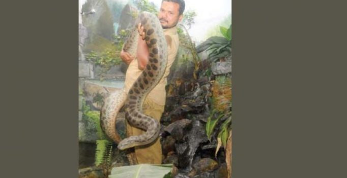 Thiruvananthapuram Zoo reptile keeper trumped by juniors over job