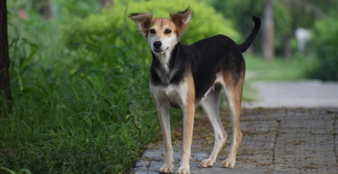 Dog raped in Mumbai; man arrested