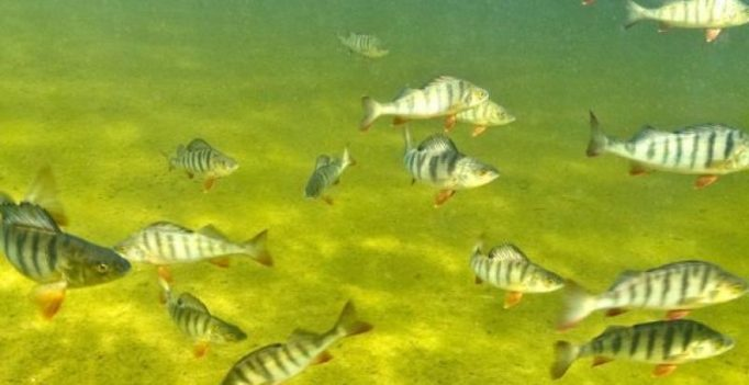 Andhra Pradesh: Usage of antibiotics in aquaculture worrisome