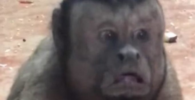 Video: Monkey with human-like face takes Chinese social media by storm