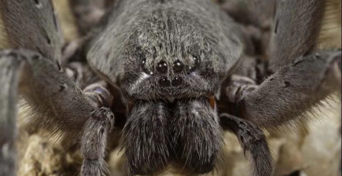World's oldest spider discovered in Australia