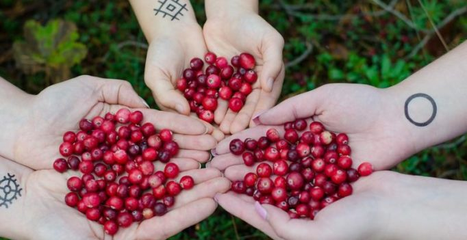 Cranberry reduces risk of urinary tract infection recurrence in women: Study