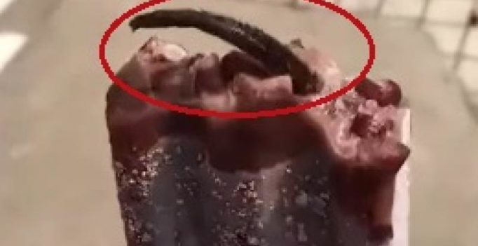 Video: Chinese woman shocked to find dead rat's tail sticking out of ice cream