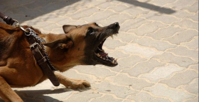 Man fights off and kills dog that ripped his child's head open