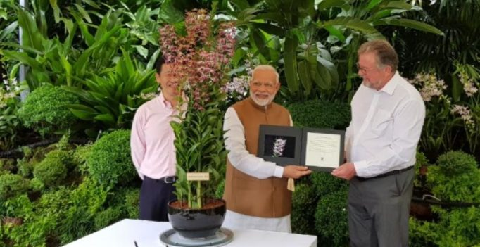 Orchid gets named after Prime Minister Narendra Modi in Singapore