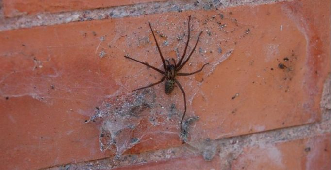 Woman orders food so that delivery guy could help her get rid of a spider