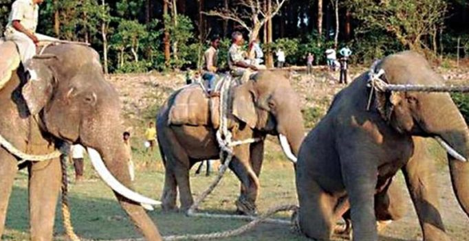 Karnataka: Jumbo numbers set to jump
