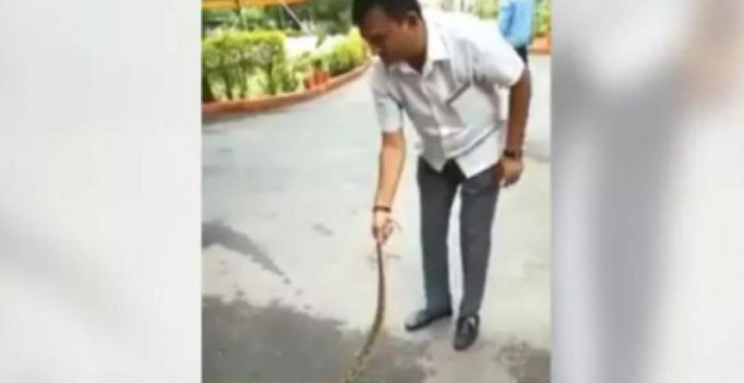 Watch: Gujarat Cong leader Paresh Dhanani subdues venomous viper