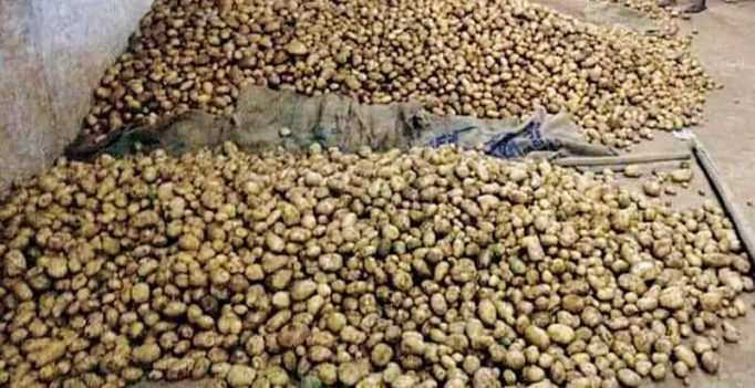 Demand for Ooty potato soars as export to Sri Lanka picks up