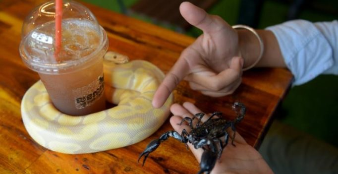Hang out with pythons while sipping on your latte at this Cambodian cafe