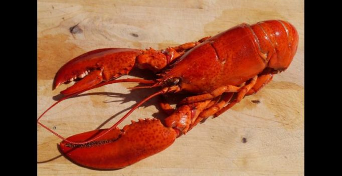 PETA envisions roadside memorial for lobsters killed in accident