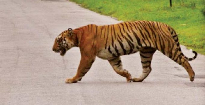 Wildlife populations fallen by 60pc since 1970, threatening civilization: WWF report